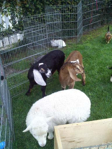Petting Zoos Petting Zoos For Parties Petting Zoos Los