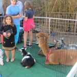 Petting Zoo Birthday Party Nashville Tn Image Inspiration of