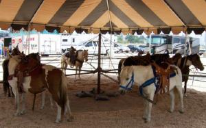 PonySweepEvents