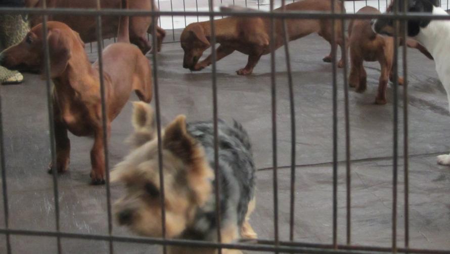 puppy-parties-LA
