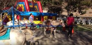 PonySweep